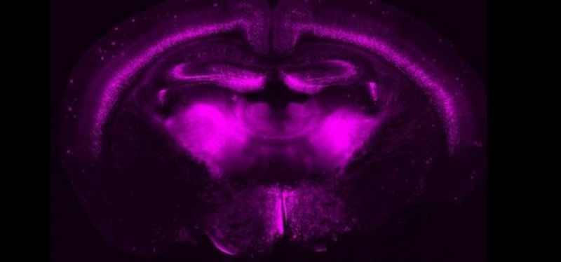 Image of the Day: CRISPR on a Mouse Canvas