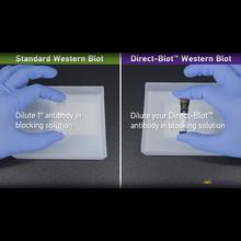 BioLegend: Direct-Blot™ Western Blots