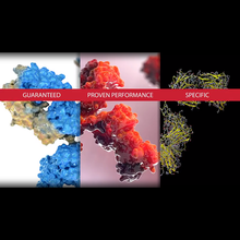 Bethyl Labs: Antibody Validation