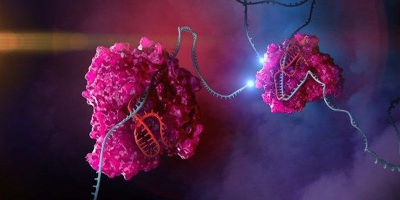 CRISPR System Targets RNA in Mammalian Cells