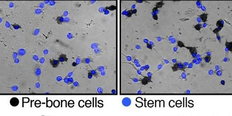 Water Level in a Cell Can Determine Its Fate
