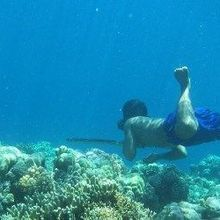 Free Divers From Southeast Asia Evolved Bigger Spleens