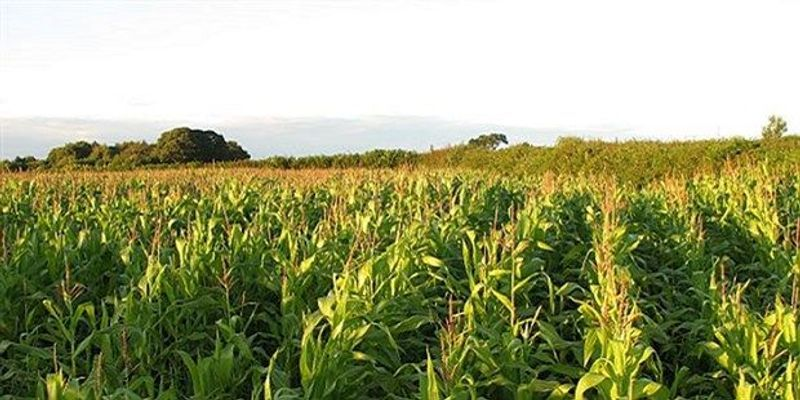 Long-Term Study Reveals Flip in Plant Responses to Carbon Dioxide