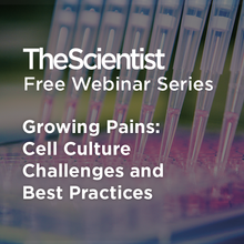 Growing Pains: Cell Culture Challenges and Best Practices