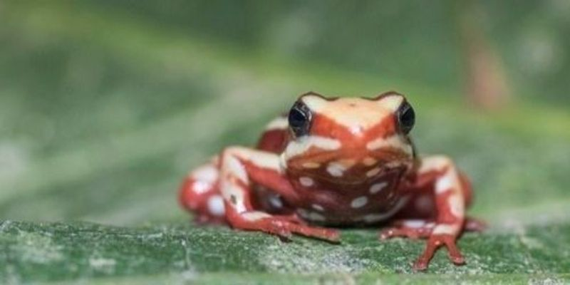 How Poison Frogs Avoid Poisoning Themselves