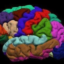 The Cellular Hallmarks of Consciousness