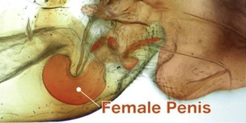 Cave Creature Genitalia, Other Weird Discoveries Net 2017 Ig Nobels