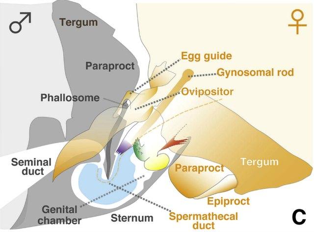 Cave Creature Genitalia Other Weird Discoveries Net 2017 Ig Nobels