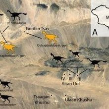 Mongolian Dinosaurs and the Poaching Problem