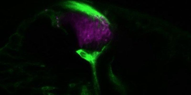 Image of the Day:Fly Sight