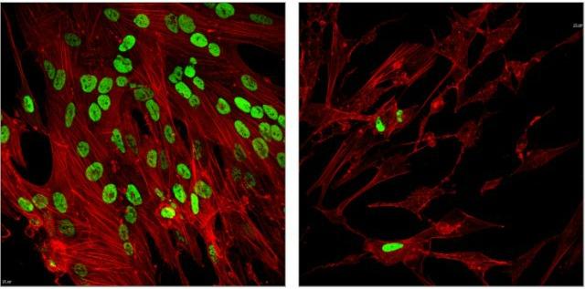 Scientists Look to Epigenetics to Thwart Viruses   The Scientist