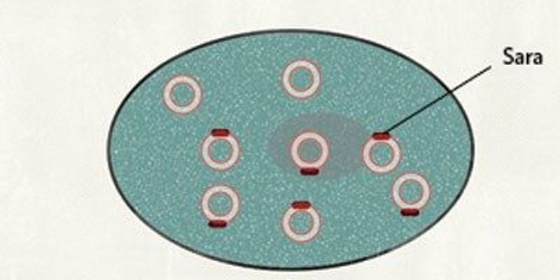 Researchers Identify Clue to Asymmetric Cell Division