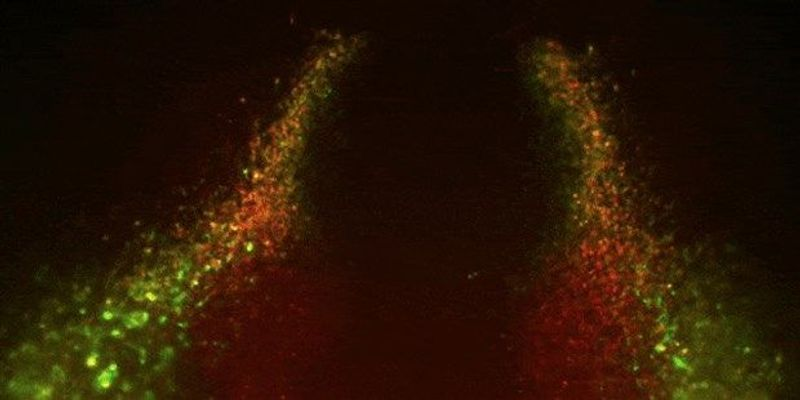 Image of the Day: A Heart is Born