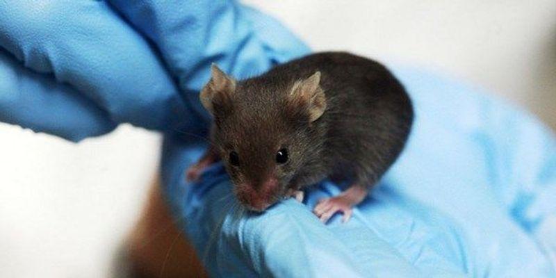 Vitamin C Depletion Accelerates Leukemia in Mice
