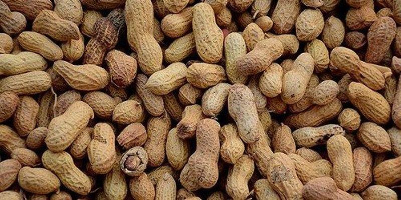 Peanut Allergy Treatment Works Long Term