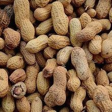 Peanut Allergy Treatment Works Long Term