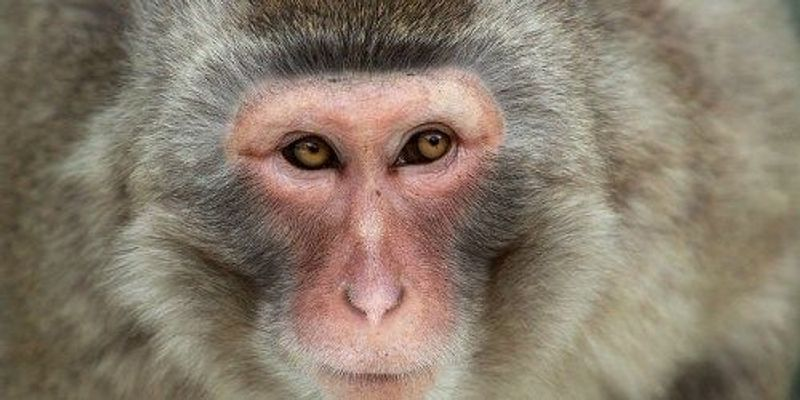 Primate Brains Made to See Old Objects as New Again