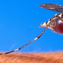 Zika Linked to More Neurological Problems in Adults