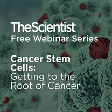 Cancer Stem Cells: Getting to the Root of Cancer