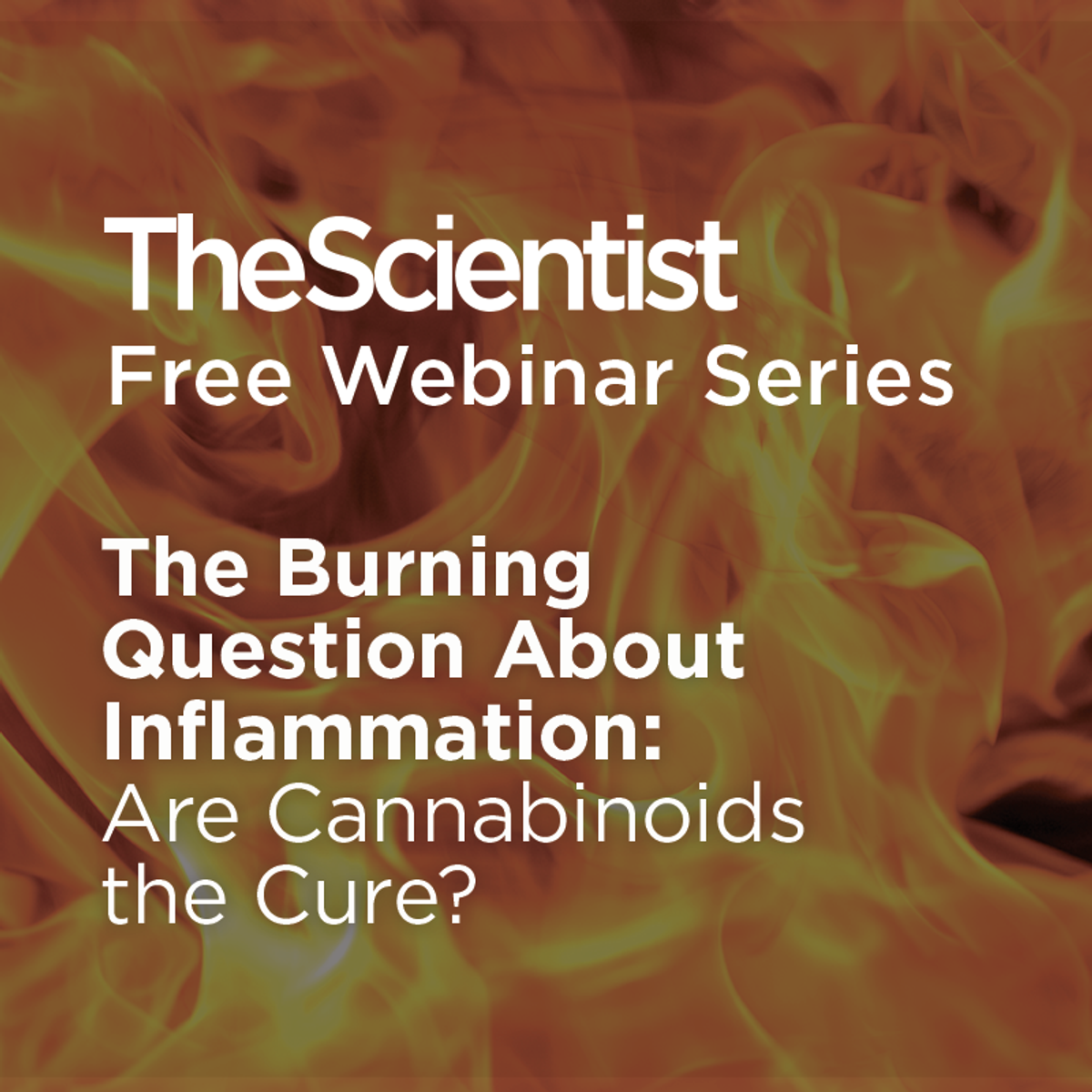 The Burning Question About Inflammation: Are Cannabinoids the Cure ...