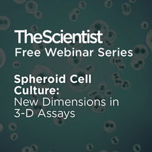 Spheroid Cell Culture: New Dimensions in 3-D Assays
