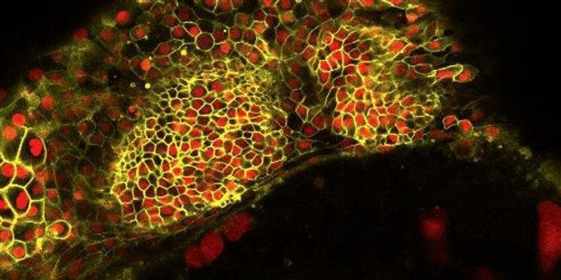 Image of the Day: Embryonic Ripples