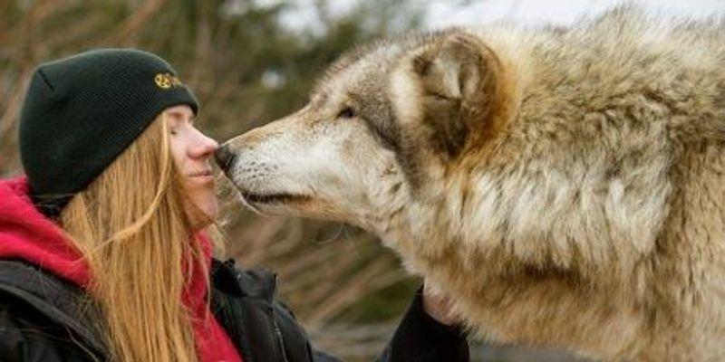 Dogs' Friendly Demeanor Written in Their DNA