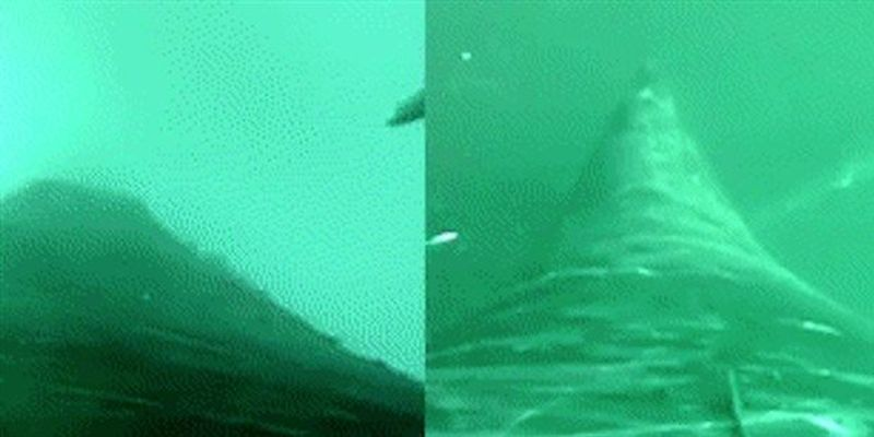 Image of the Day: Whale Vision