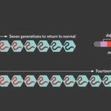 Epigenetic Inheritance in Nematodes