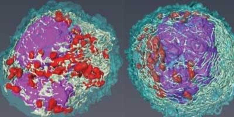 Researchers Uncover Previously Unknown Immune Cell Subtypes