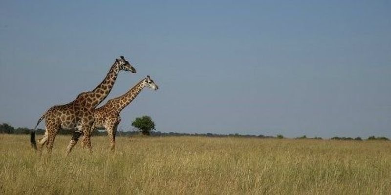 Earth Experiencing Sixth Mass Extinction: Study
