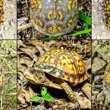 Image of the Day: Boxes of Turtles
