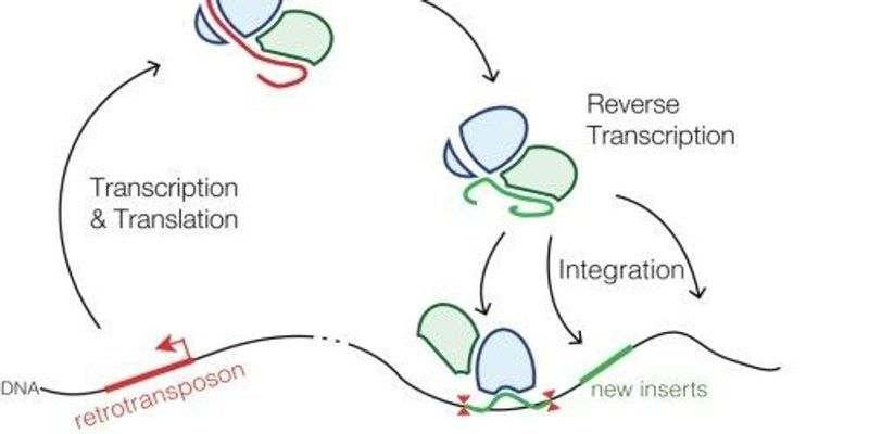 """RNA Protects """"Naked"""" Genomes from Retrotransposons"""