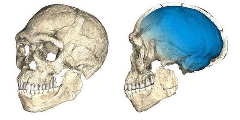 Scientists Uncover Oldest <em>Homo sapiens</em> Fossils to Date
