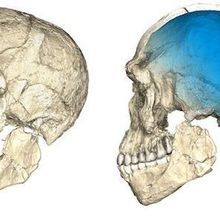 Scientists Uncover Oldest <em>Homo sapiens</em> Fossils to Date