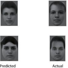 Primates Use Simple Code to Recognize Faces