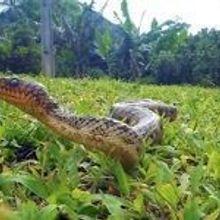 Snake Secrets