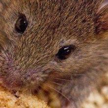 Binge-Eating Neurons Identified