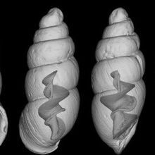 Image of the Day: Snails Uncensored