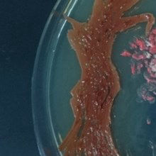 Image of the Day: Beautiful Bacteria