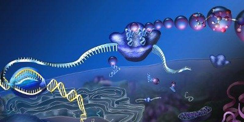 How Statistics Weakened mRNA's Predictive Power