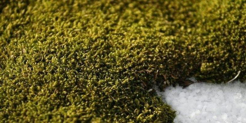 Antarctica Is Turning Green