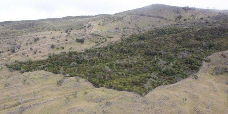 Global Forest Estimate Rises 9 Percent