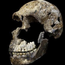 <em>Homo naledi</em> Likely Roamed Earth with <em>H. sapiens</em>