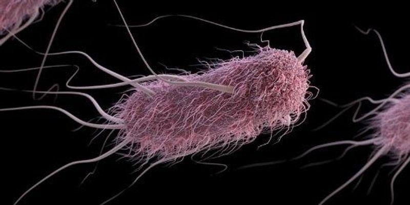 Ancient Protein Helps <em>E. coli</em> Thwart Viral Attack