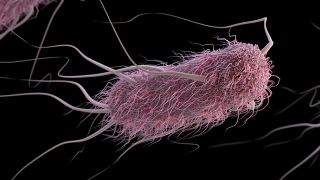 CDCResurrecting Ancient Proteins In Modern E Coli Can Protect The Bacterium From Viral