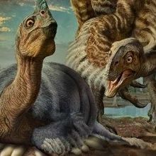 From Smugglers to Scientists: New Dino Species Described
