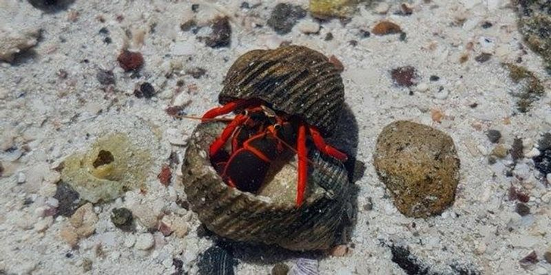 Image of the Day:Cantankerous Crab