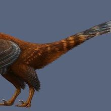 Two New Dinosaur Species Identified