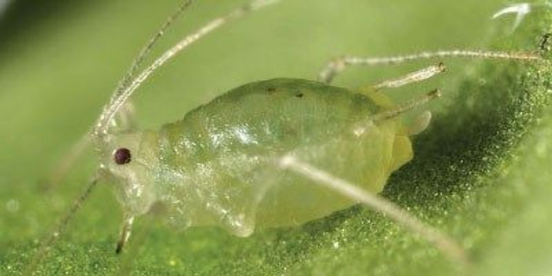 Uncovering the Secrets of a Successful Pest